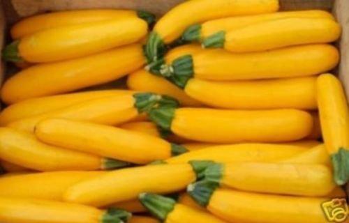 20+ Graines de courgette bio d'or ~ Courge jaune Bush ~ été ~ Abondant