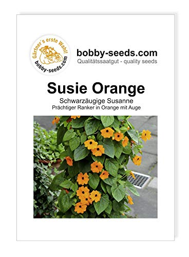 Susie Orange Schwarzäugige Susanne von Bobby-Seeds Portion