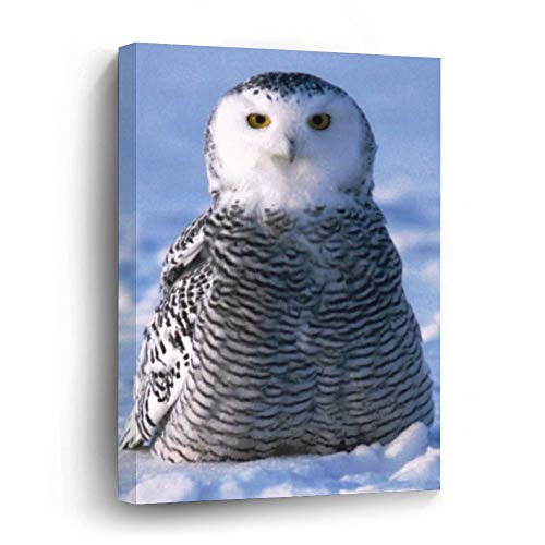 Alaska Arctic Snowy Owl Photo Designed Canvas Picture Painting Artwork Wall Art Poto Framed Canvas Prints for Bedroom Living Room Home Decoration, Ready to Hanging 16'x24'