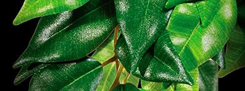 Exo Terra Regenwaldpflanze Fikus groß - 3