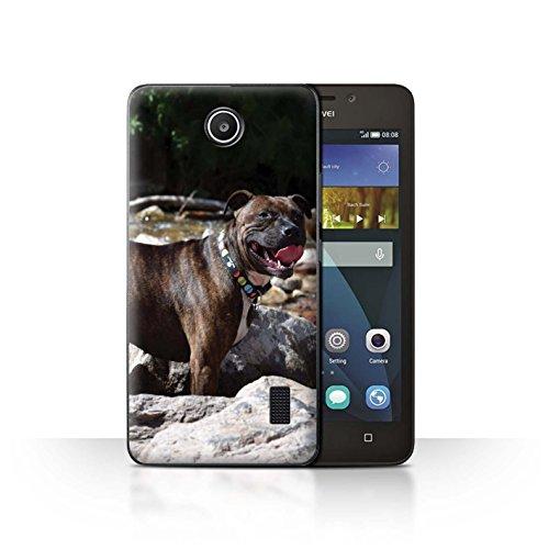 Handy Hülle kompatibel mit Huawei Y635 Beliebter H&/Eckzahn Rassen Staffordshire Bull Terrier Transparent Klar Ultra Dünne Handyhülle Hülle Cover