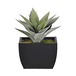 Sejahtera Group Artificial Frosted Green Succulent Desk Top Plant in Decorative Vase, 2 lbs