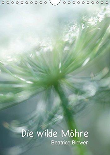 Die wilde Möhre (Wandkalender 2019 DIN A4 hoch): Die wilde Möhre, eine schöne Feld- und Wiesenblume (Monatskalender, 14 Seiten ) (CALVENDO Natur)