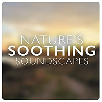 Nature's Soothing Soundscapes