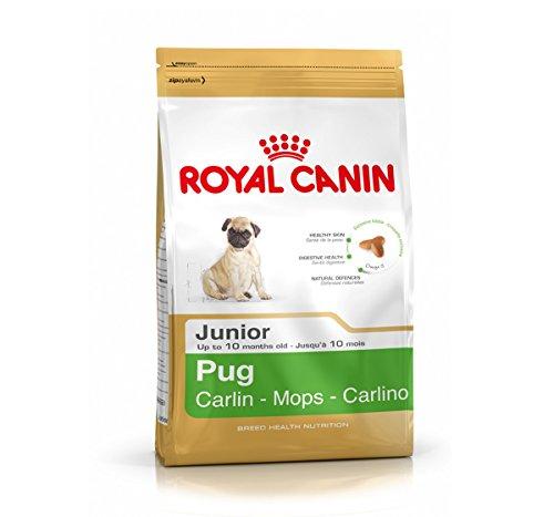Royal Canin Pug Mops Junior 0,5kg