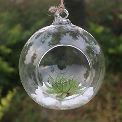 Allegorly 1 Stück Glas hängender Pflanzer zum Aufhängen Terrarium Glas Vase Flower Air Pflanzgefäß Container Home Office Hochzeit Dekoration Terrarium Vase Home Decoration