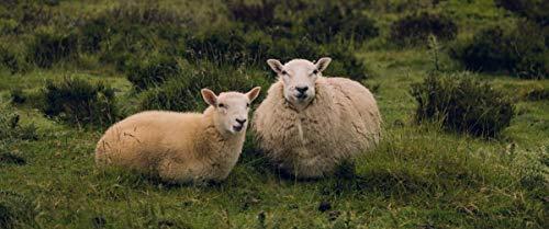 DIY Schilderen op nummerkinderen schilderen kitTwee schapen handgeschilderd frameloos schilderij 40x50cm