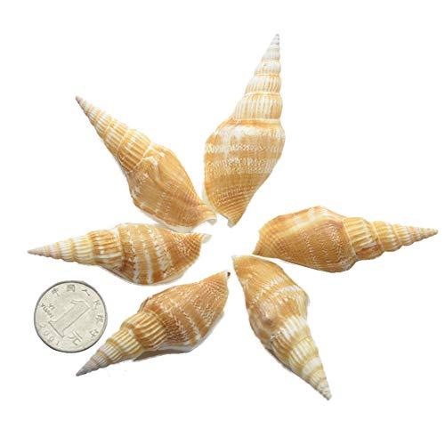 TELLW Pure Natural Shell Golden Axe Torch Espiral Acuario Decoración Boda Pegatinas...