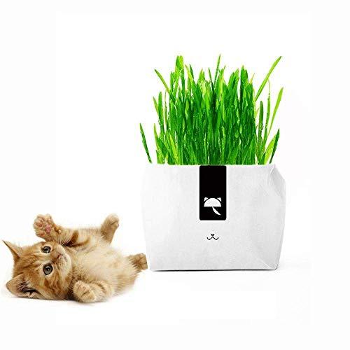 Aiviel Katzengraspflanze für den Innenbereich – Super einfach zu züchten Katzen-Gras-Samen mit kreativem Papier-Pflanzgefäß, natürliches Haarball-Mittel für Katzen, tolles Geschenk für Tierliebhaber