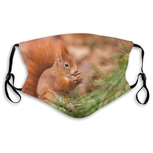 Rotes Eichhörnchen, das eine Eichel im Gras isst Waschbares wiederverwendbares Aktivkohlegesicht (Erwachsenen- und Kindergröße),