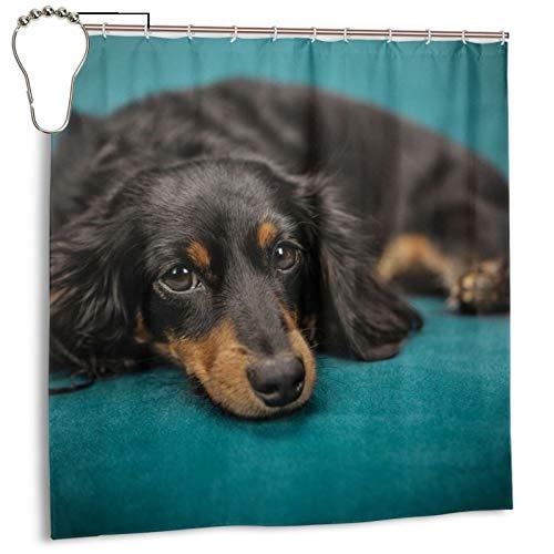PQASDC Cortina de ducha eficiente de secado rápido para baño, cortina de ducha decorativa de 182 x 182 cm, juego de cortina con 12 ganchos, para sofá de mascotas