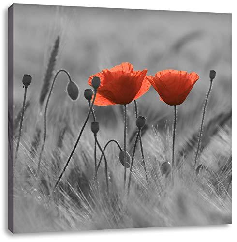 Pixxprint Mohnblumen auf einem Feld schwarz/weiß, Format: 70x70 auf Leinwand