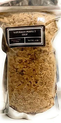 SEA MOSS (RAW) 2 lb - NATURAL IRISH MOSS,CHONDRUS CRISPUS,Jamaica Drink Below