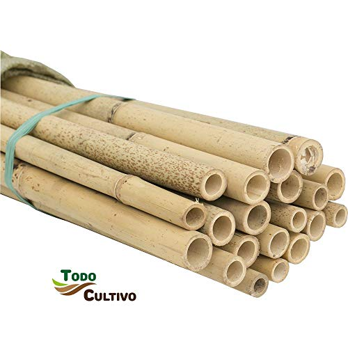 Tutor de bambú tailandés de 1,5 m. de Altura, diametro 22-24. Pack de 50 Unidades. Tutores válidos para Todo Tipo de Plantas.