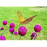 花の種子:花の種子ハイブリッドパスヘッジガーデンガーデン[ホームガーデン種子エコペンシルベニア、FLWR-PD-SD-76380を誘致カット花蝶ラスティングGomphrenaロング