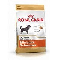 RC Minature Schnauzer Junior