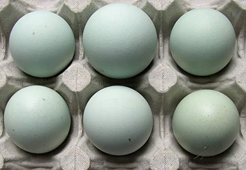 10+2 Hühner-Eier grün, aus Freiland Haltung, reich an Omega 3, direkt vom Bauernhof , tages-frische Delikatesse aus der Altmark, Ei von Grünleger / Araucana x Marans . Rarität