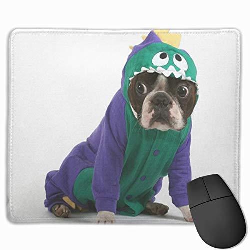Muiskussen, bureaumuis, muismat witte hond Boston Terrier in dinosaurus kostuum huisdier Puppy pak neus dier baby hond