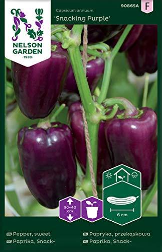 Snack-Paprika Samen Snacking Purple - Nelson Garden Saatgut für Gemüsegarten - Pflanzensamen Paprika lila (4 Stück) (Einzelpackung)