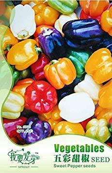 VISTARIC 100 graines d'oignon Belaya Koroleva - légumes biologiques Reine Blanche Heirloom Semences pour la plante de jardin de la maison