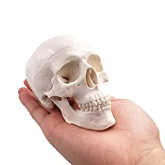 ☑『SPECIFIC』- The resin mold male replica separates into 3 pieces. The calvaria, base of skull, and mandible separate making studying and labeling a breeze. ☑『PERFECT FOR TEACHING & EDUCATION』- Being a miniature model, it is a great tool for classroom...
