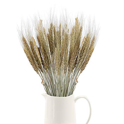 XHXSTORE 100 piezas de Trigo Seco Flores Secas Naturales Ramo de Flores Orejas de Trigo para Jarrón/Mesa para el hogar/Balcón/Florero de boda/Entorno-50CM
