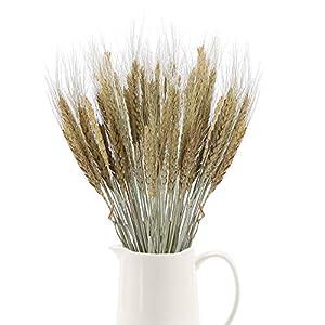 XHXSTORE 100 piezas de Trigo Seco Flores Secas Naturales Ramo de Flores Orejas de Trigo para Jarrón/Mesa para el hogar…