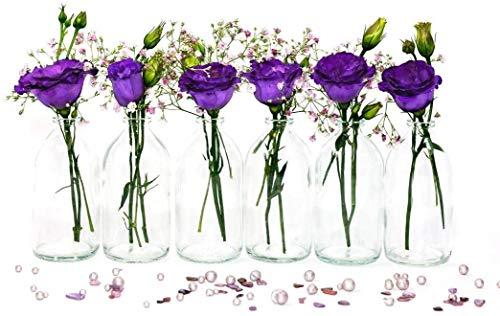 casavetro 12/24 kleine Mini Flaschen Vasen 100 ml Set Mini-TR-Apotheker Glasflaschen klar Deko Hochzeit (12 x 100 ml)