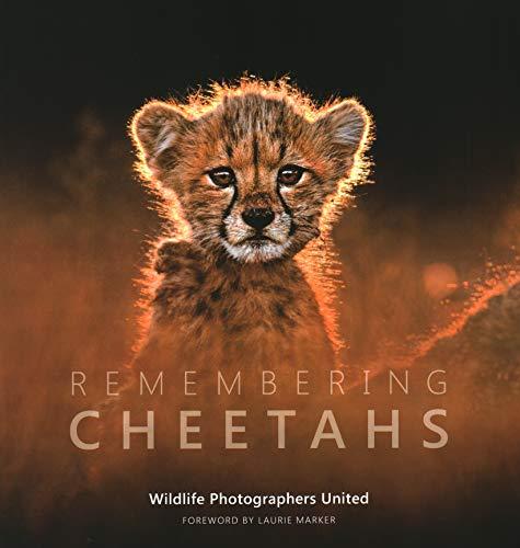 Remembering Cheetahs: 5