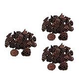 yotijar Vaina de Loto Secada Natural 90 Piezas Flores Frutas para Decoraciones