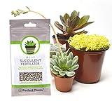 Succulent Fertilizer by Perfect Plants - Light Rate, Slow Release...