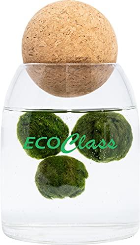Marimo Family - 3 Marimo (alga palla, moss ball) in vaso di vetro 500 ml con tappo in sughero sfera block yoga