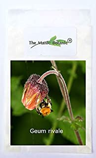 CROSO Germination Seeds ONLY NOT Plants: Geum Rivale - Water Avens - Hardy X 50 Seeds - Bee Friendly!