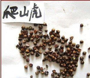 50 PC graines de plantes de grande escalade, type de mur la plupart des graines de lierre de Boston