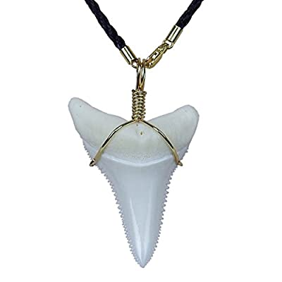 GemShark Shark Tooth Necklace for Men 1.8 inch Great Megalodon White Gold Surfer Beach Charms Pendant with Evil Skull Bead Also Jaw Decor Collection Display