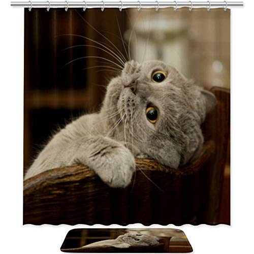 TIZORAX Close-Up Of The Cat Is Played Wasserdichter Duschvorhang Badezimmer Landschaft Badematte