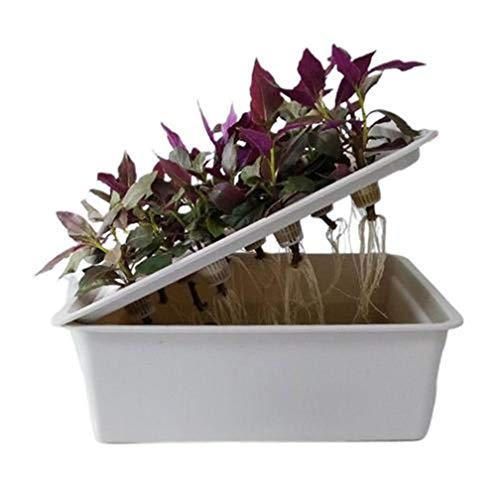 yangguifengji Hydroponik Indoor Garden Anzuchtsystem Bodenloser Anbau Pflanzensämling Box 41 * 24 * 14 cm