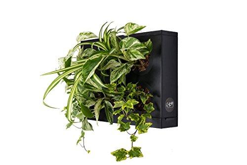 HOH! by Ortisgreen, plantaardig schilderij in de kleur zwart van ABS-kunststof, wandvaas, hangende vaas, wanddecoratie, verticaal, groen design, natuursubstraten en handleiding inbegrepen