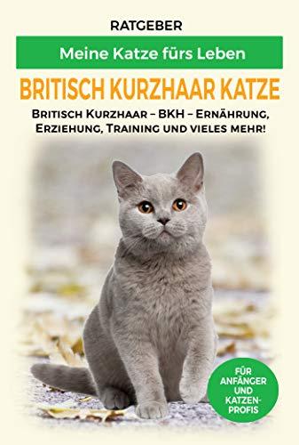 Britisch Kurzhaar Katze: Britisch Kurzhaar Katze Ratgeber - BKH Katze - Erziehung, Ernährung und Pflege (Katzenrassen 1)