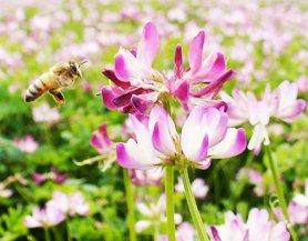 かの蜂『国産蜂蜜国産九州レンゲ蜂蜜』