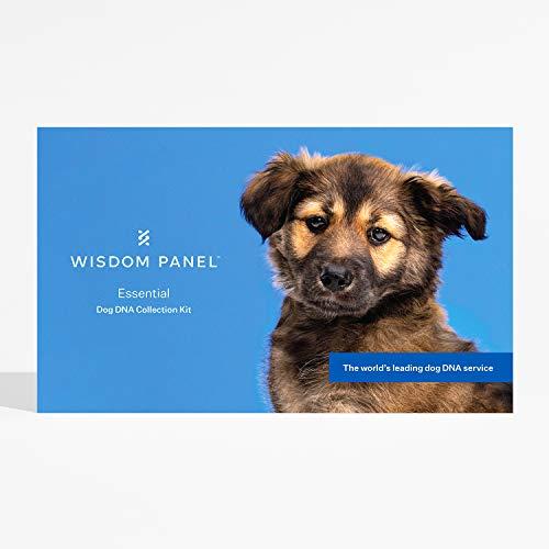 Wisdom Panel Panneau de Sagesse Essential - Test d'ADN pour Chien pour l'ancêtre, Les Traits et Les complications médicales, 75 g