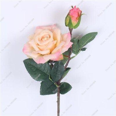Graine Rose colorée Chine les plus populaires Bureau Bonsai Rosas Plante en pot fête de mariage décoration Balcon VÉGÉTATION 50 Pcs 13