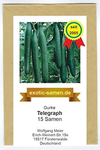 Gurke - Gewächshausgurke - Telegraph - 15 Samen