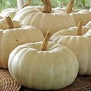Best snow white pumpkin seeds Reviews
