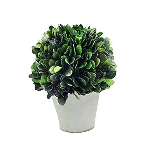 COCOMIA Preserved Boxwood Ball with Small Pot  Natural Indoor Greenery, Simple Care, 4Wx4Dx5.9H