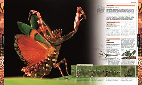 Tiere: Die große Bild-Enzyklopädie mit über 2.000 Arten - 2