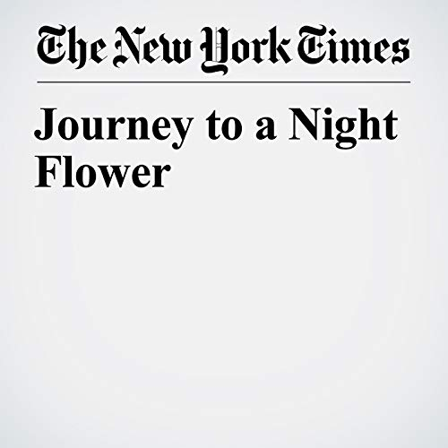 Journey to a Night Flower copertina