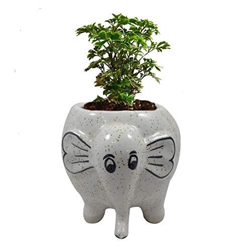 India Meets India Flower Vase Elephant Ceramic Handicraft Designer Vases | Pot | Planter | Home Décor | Khurja Pottery