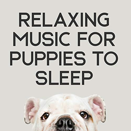 Relaxing Music For Puppies To Sleep - 15 Relaxing Songs For The Sake Of Your Dogs