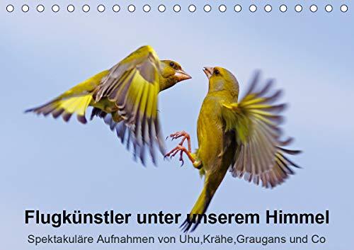 Flugkünstler unter unserem Himmel - Spektakuläre Aufnahmen von Uhu,Krähe,Graugans und Co (Tischkalender 2021 DIN A5 quer)